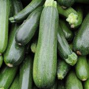 Courgettes Guy Huertas (Salon de Provence 13) (63329)